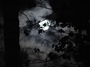 Nuit Leeuwin